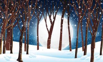 Floresta de inverno na cena noturna