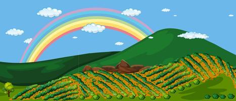 Beautiful Farm Mountain and Rainbow