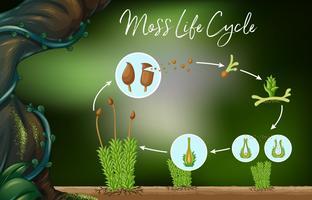 Vector de la ciencia del ciclo de vida del musgo