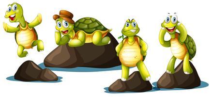 En uppsättning lyckliga sköldpaddor