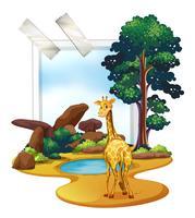 Giraff står på savanna fältet