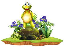 Tartaruga felice isolata in natura
