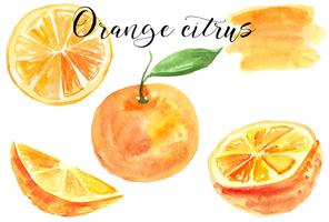 Set orange. Watercolor illustration. Food. Isolated. Natural, organic. Fruit. Citrus. Orange, yellow, red, green. Vector.