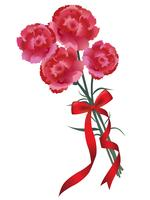Carnation bouquet with a red ribbon for Mother's Day, birthday, wedding, etc.