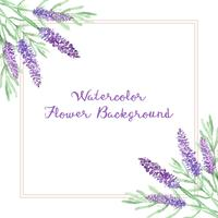 watercolor lavender flowers background