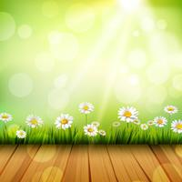 Spring Background With Daisies