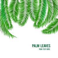 Bandeira de fundo tropical palmeira