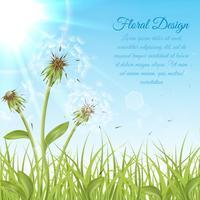 White dandelions on green grass