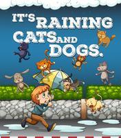 Poster di idioma con pioggia di cani e gatti