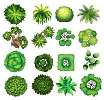 Uppifrån av olika typer av växter