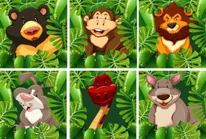 Vilda djur i busken