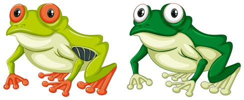 Two green frogs on white background