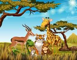 Wild animals in the savanna field