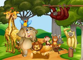 Animales salvajes que viven en el bosque.