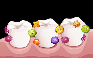 Bacterias en los dientes humanos.