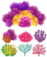 Coral reef on white background