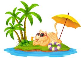 A cat on summer holiday
