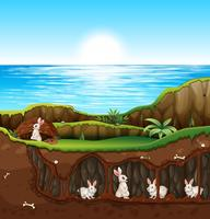 Rabbit living in underground vector