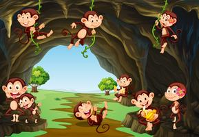 Monkeys living in the cave