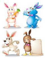 Vier konijnen
