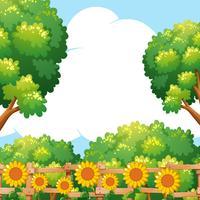 Bakgrundsscen med solrosor i trädgården