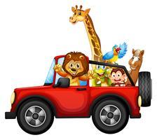 Animales y carro