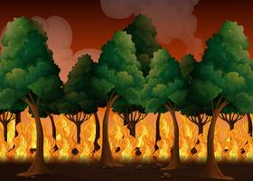 A Forest with Wildfire Disaster