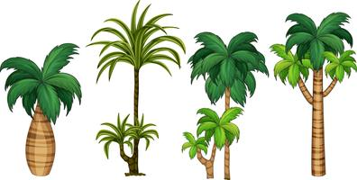 Set of different palm tree