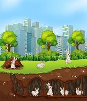 Kaninchen oben und unter der Erde