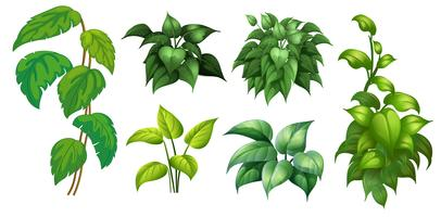 A set of green plant