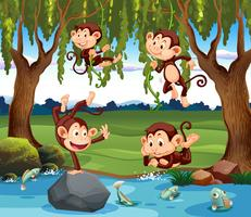 A group of monkey in nature