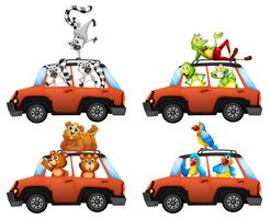 A set of animals in car