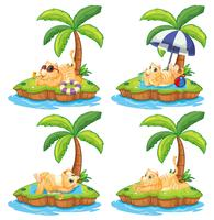 Conjunto de gato preguiçoso na ilha