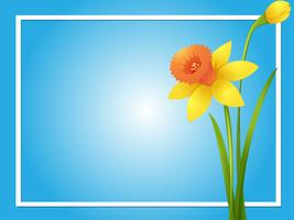 Border template with yellow daffodil