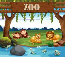 Monkey and lion in the zoo