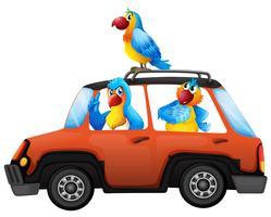 Il pappagallo viaggia in auto