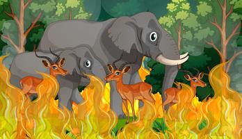 Wild animals in wildfire forest