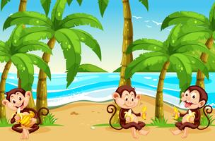 Monkey at the beach