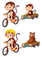 Monkey riding bicycle trailer vector