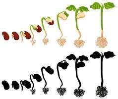 Planta crescendo em diferentes estágios