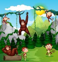 Singe et chimpanzé dans la nature