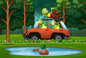 Frog travel by car in forest