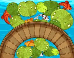 Vue de dessus de poisson et nénuphar dans l'étang