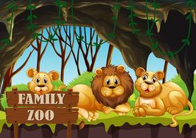 Löwe, der im Zoo lebt