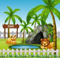 Manlig och kvinnlig lejon i djurparken