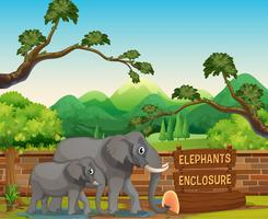 Two elephants in the zoo