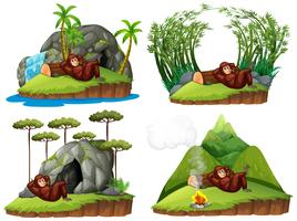 Orangutan in four different scene