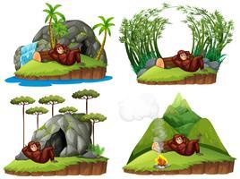 Orang-Utan in vier verschiedenen Szenen