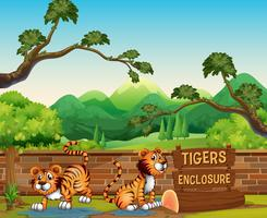Zoo scene with tigers at day time