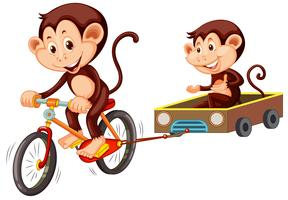 Monkey riding bicycle on white background